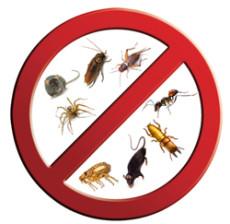 Pest Control Somerset Region